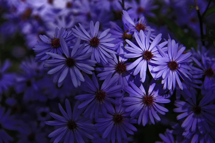 Christchurch Flowers