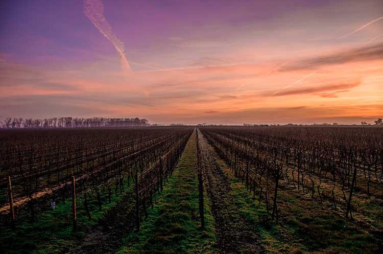 Sunset Vineyards
